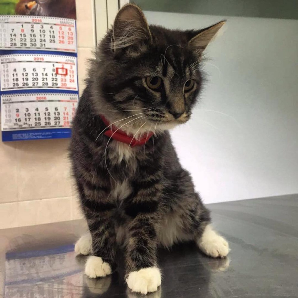 Что сделать чтобы кот не метил квартиру