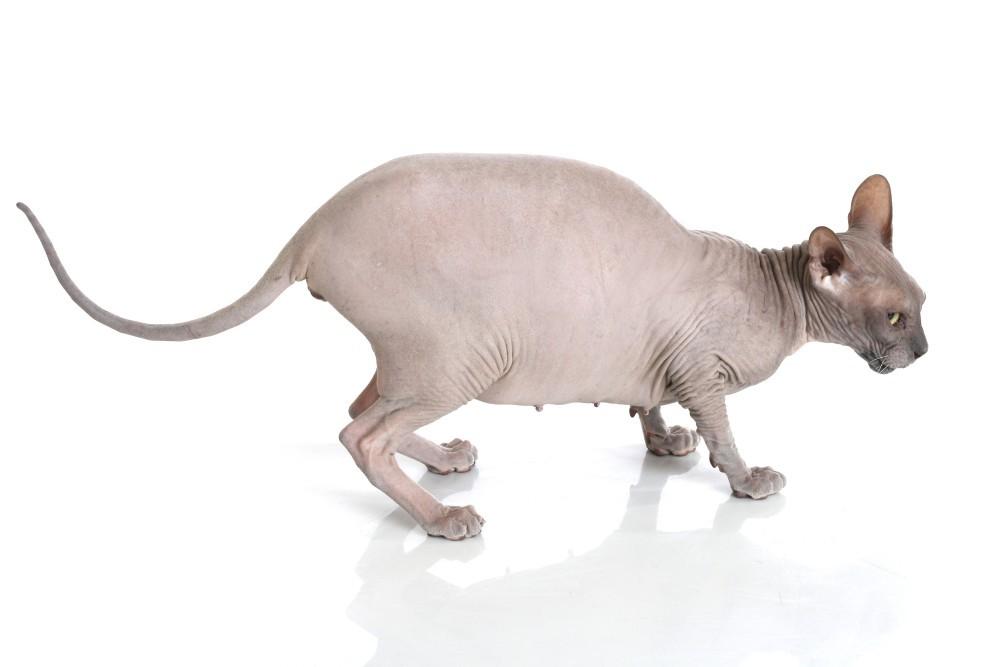 Беременность у кошки - Родители.онлайн