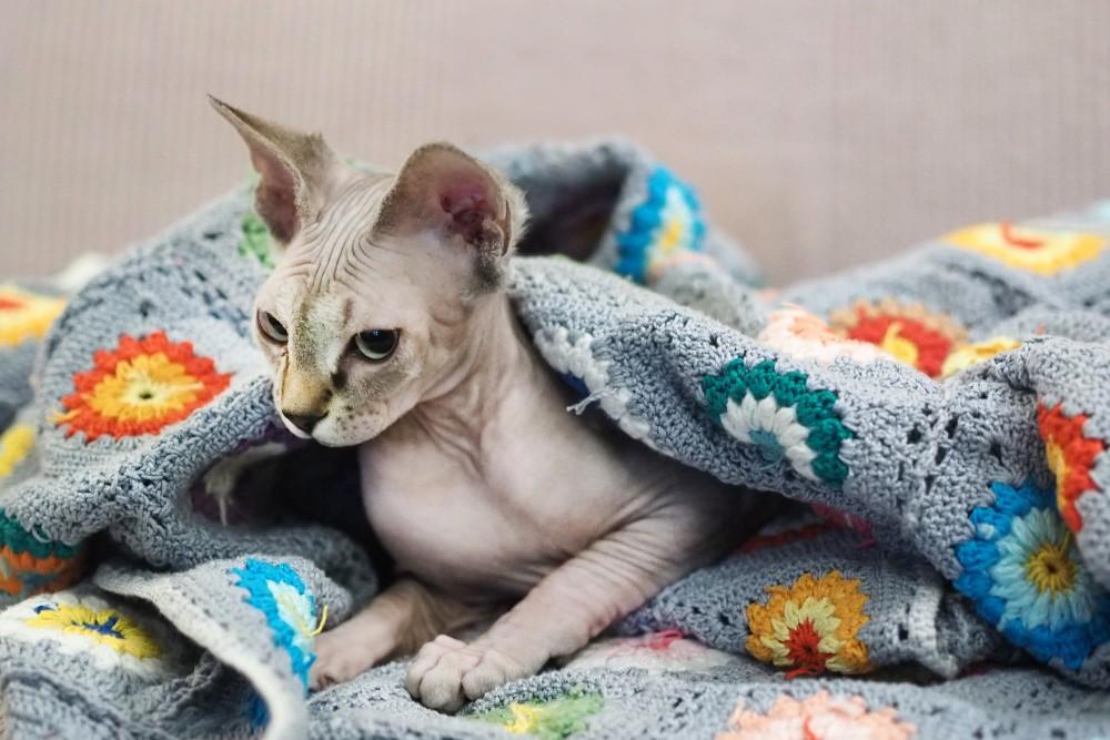7 причин, почему кошка прячется под одеяло