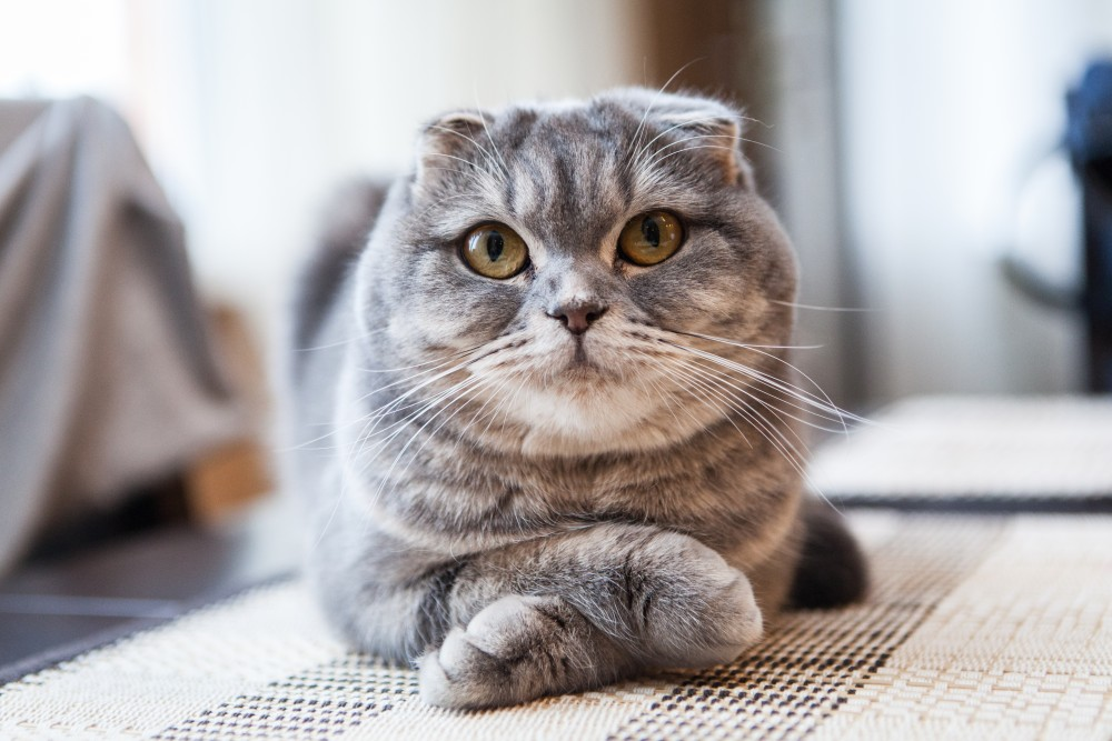 Как передвигаются коты