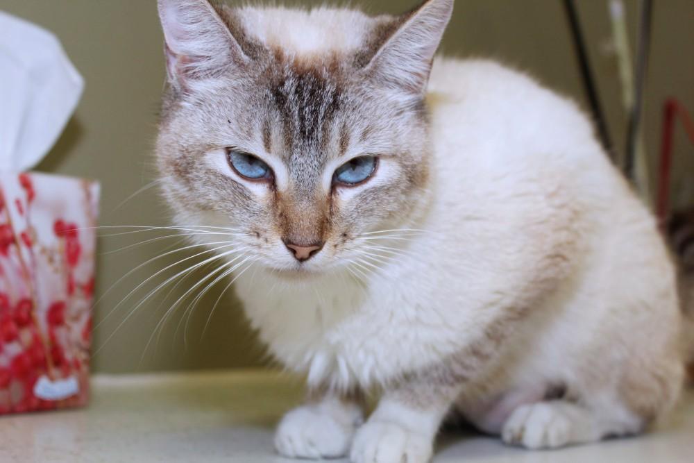Если дома кот и кошка если кот кастрированный