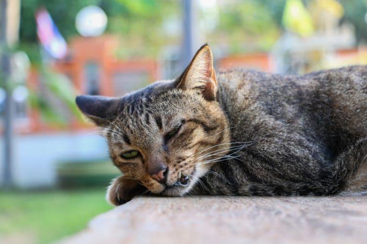 Сколько раз в сутки кот должен писать в