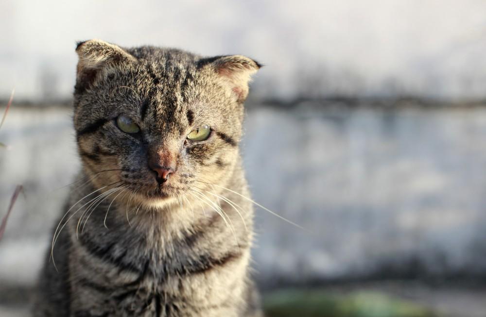Во сколько кот начинает метить