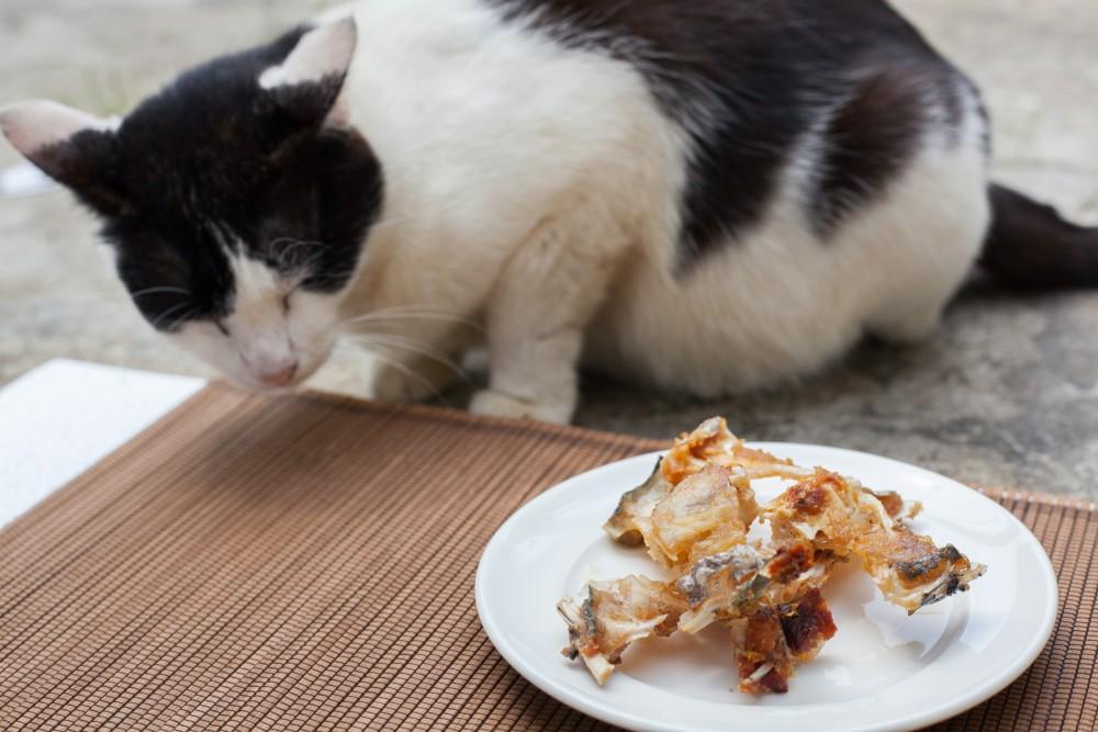 запах изо рта у кошки причины форум