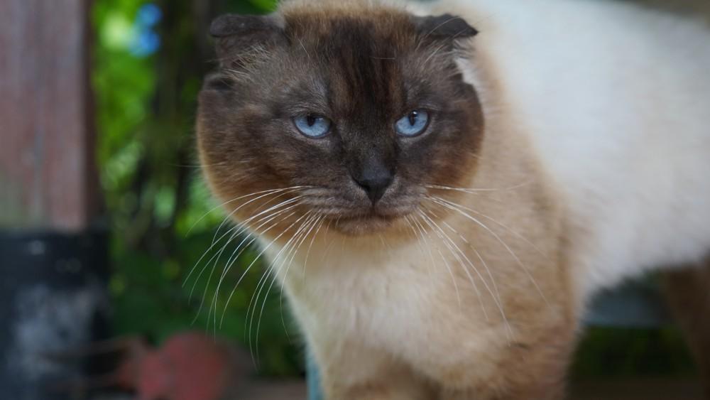 Основные причины, почему кот не ест, и пути решения проблемы. Почему кот ничего не ест, сильно похудел и ослабел: лечение и симптомы.