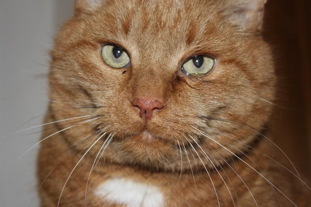 Красно-коричневые выделения из глаз кота