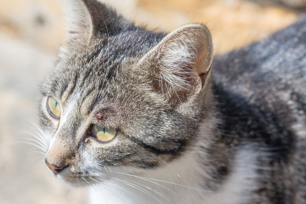 Конъюнктивит у кошки лечение в домашних условиях 360