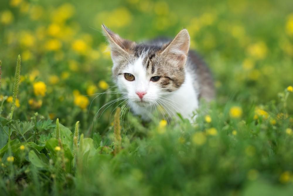 Какого цвета выделения у кошки