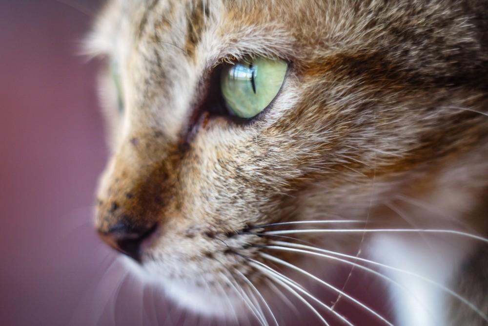 Что можно закапать в нос коту
