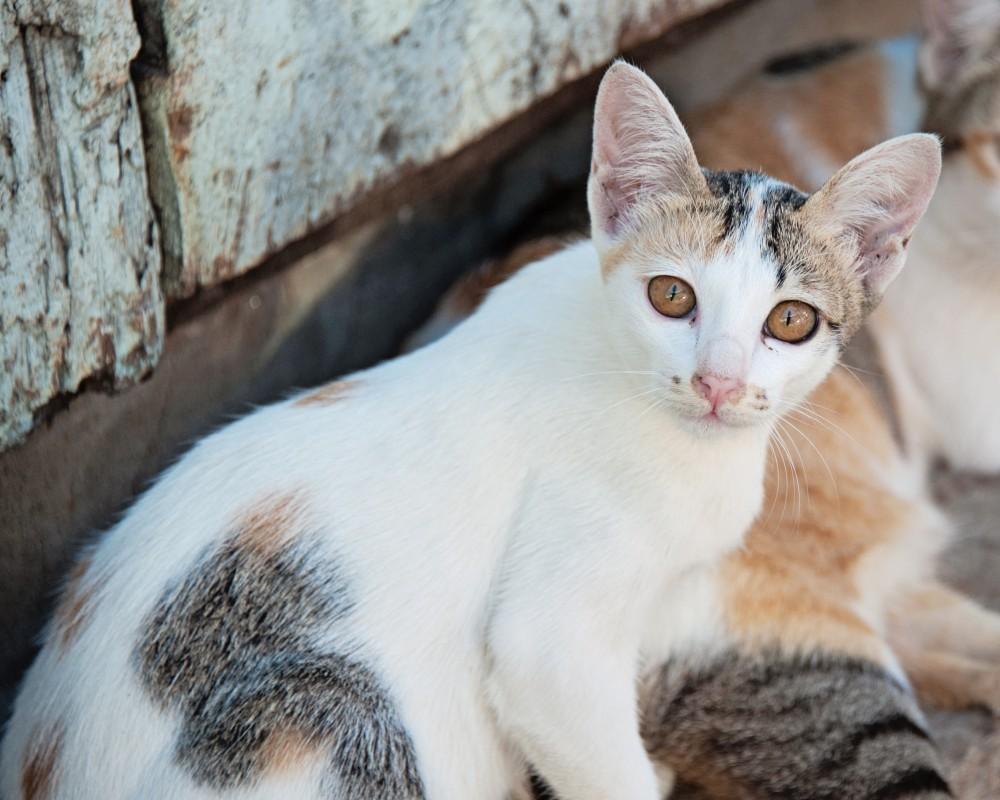 Расшифровка анализа крови на биохимию у кота