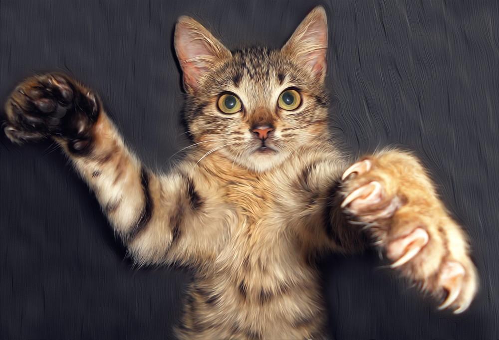 Кот откусил член