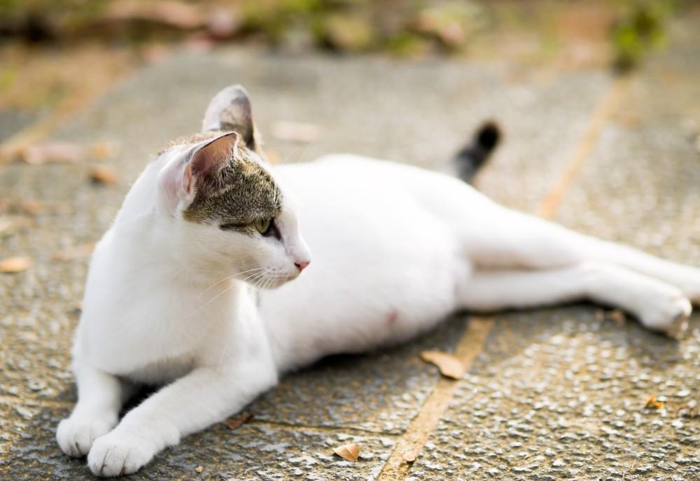 Рак груди у кошки лечение