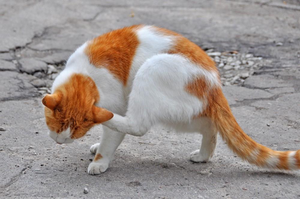 Капли от блох и клещей для котят