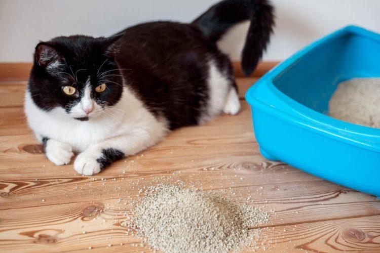 Кот подолгу сидит в лотке