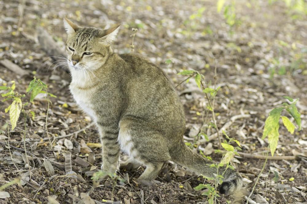 почему кот какает слизью