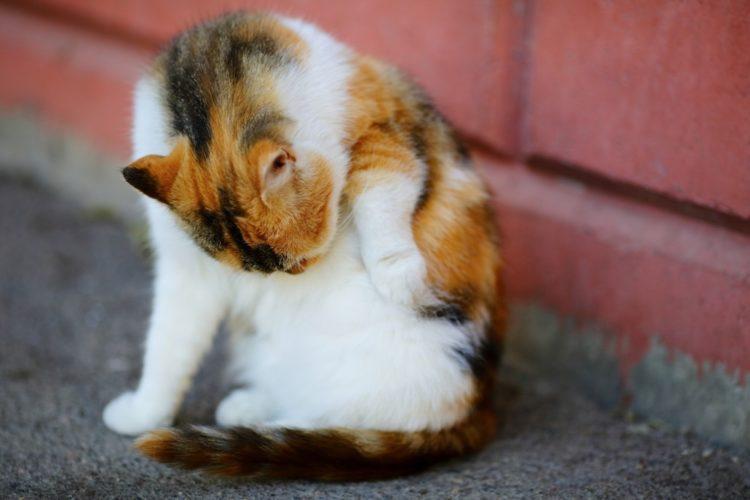 Как умирают коты от мочекаменной болезни