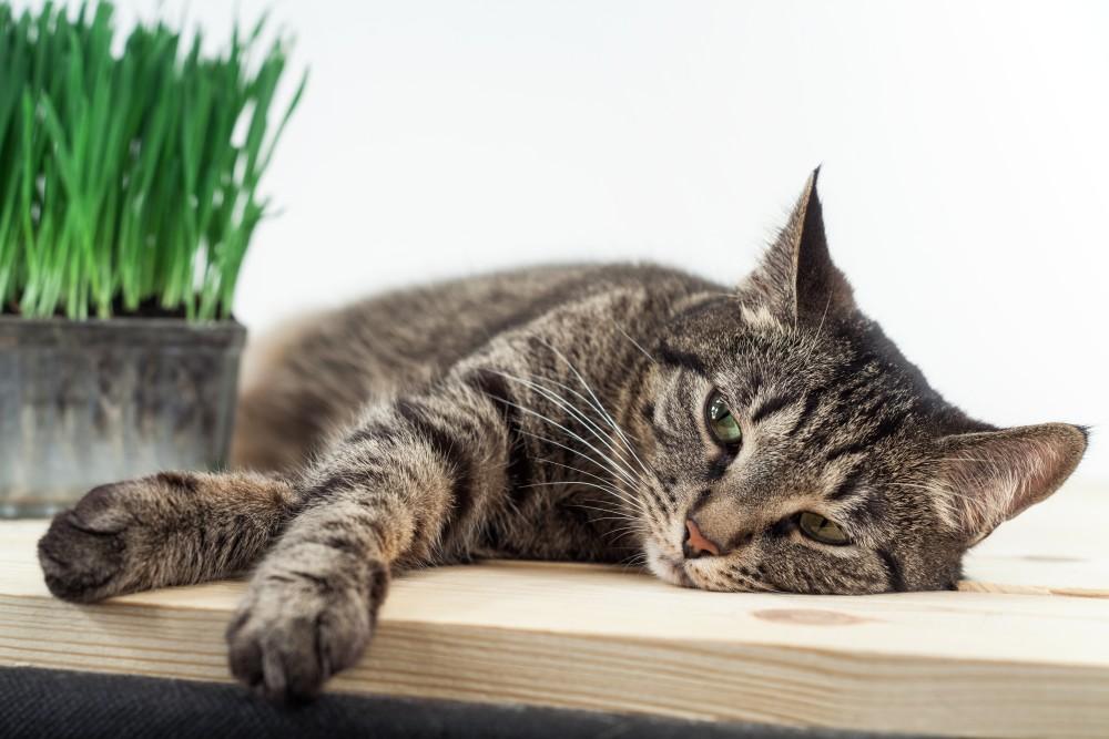 Что делает кот с валерьянкой