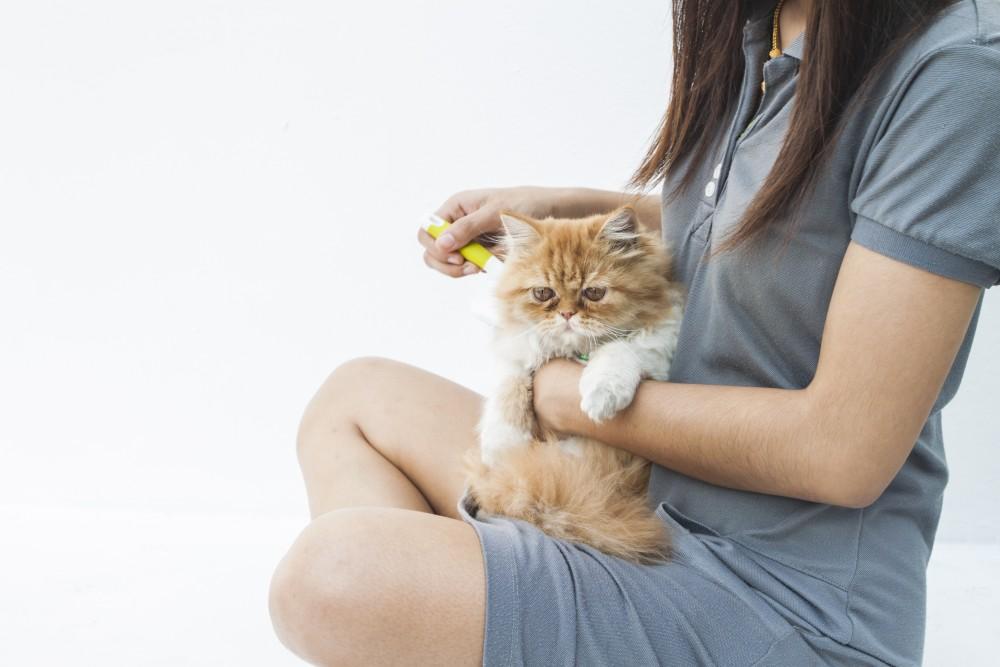 Средства от аллергии на кошку