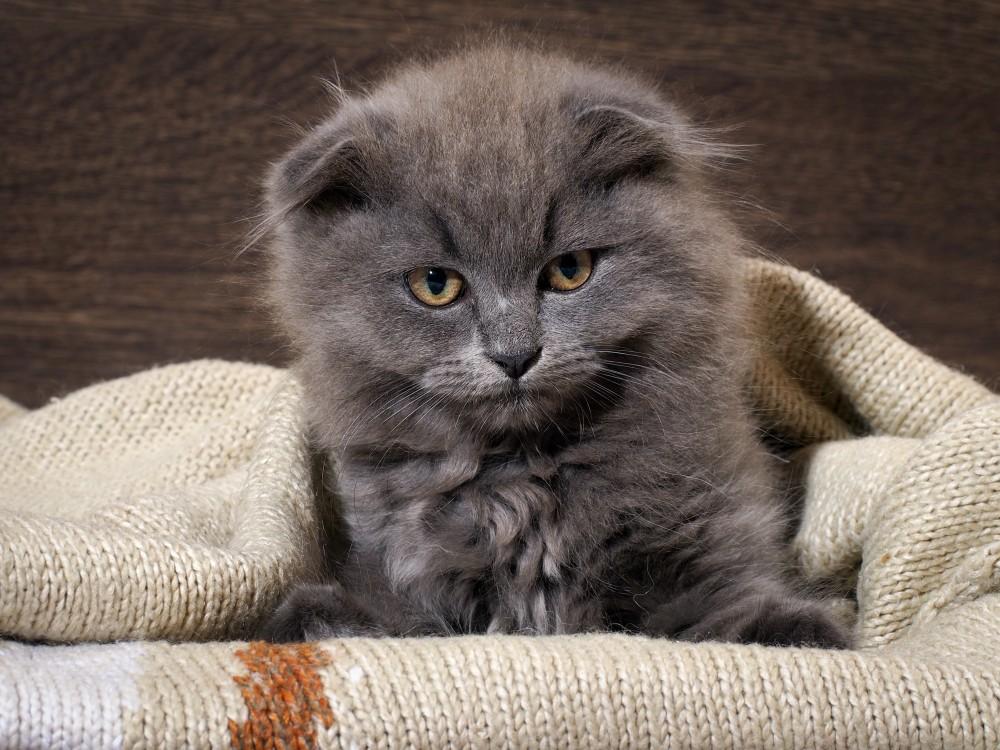 Аллергия на кошек у детей проявления