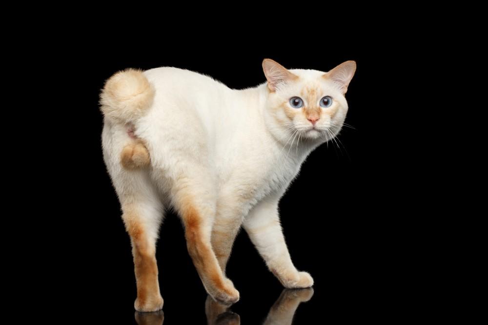 Асд фракция для кошек от рака