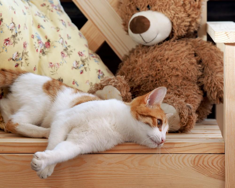 Токсоплазмоз у кошек - симптомы, признаки, лечение, анализы и как не заразиться