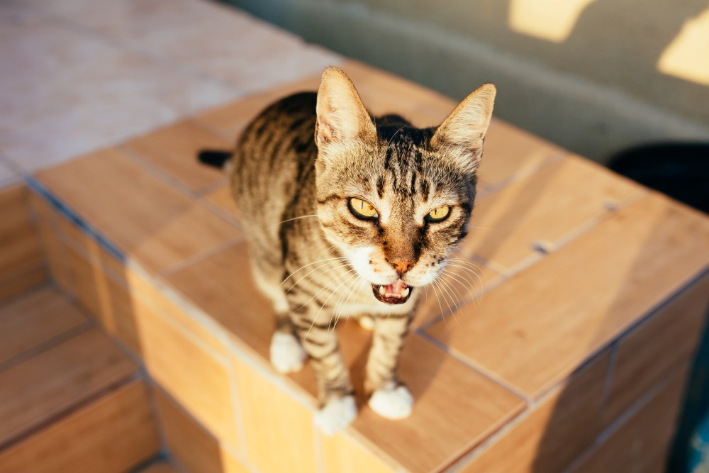 best way to clean cat urine from clothes