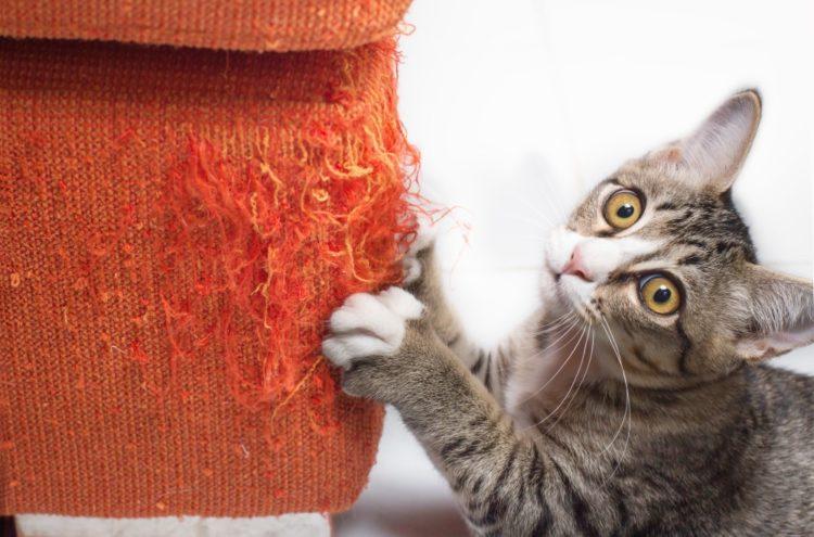 Коты метят дверь входную к чему