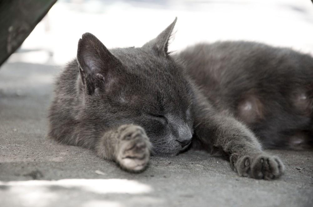 Рак молочных желез у кошек: причины, диагностика, лечение