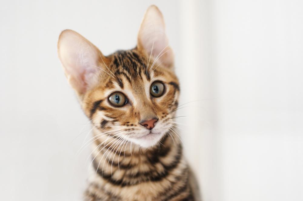 Как лечить кота от диабета
