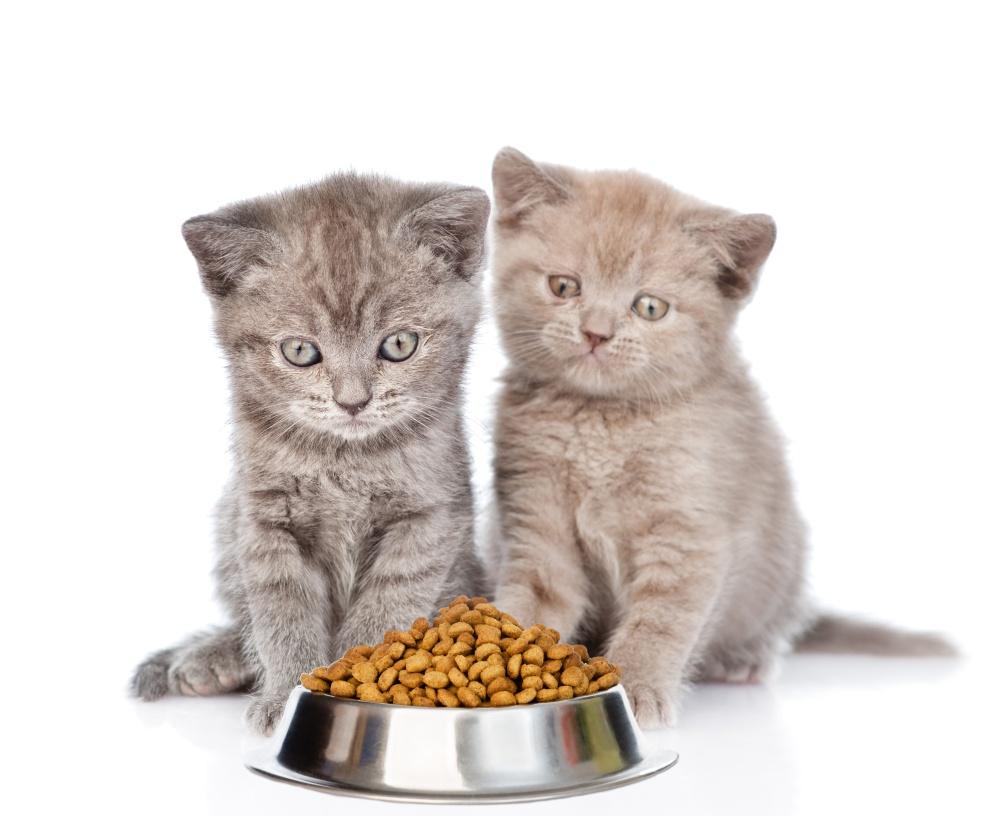 Лечебные корма для кошек при почечной недостаточности