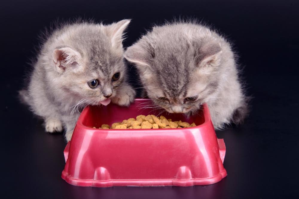 что можно кошке есть при почечной недостаточности