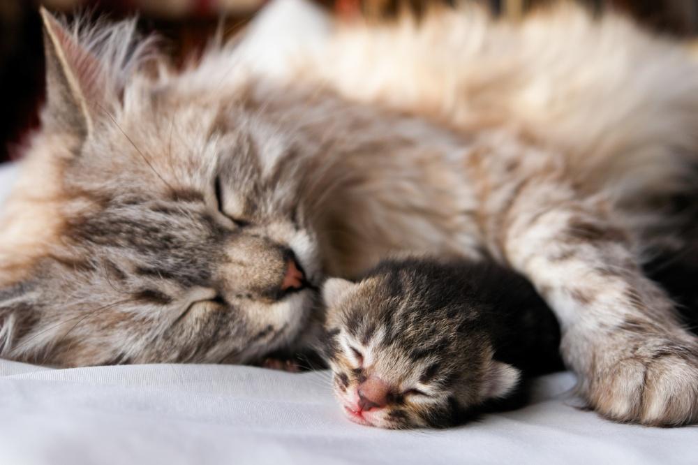 Высокий уровень аст у кошки