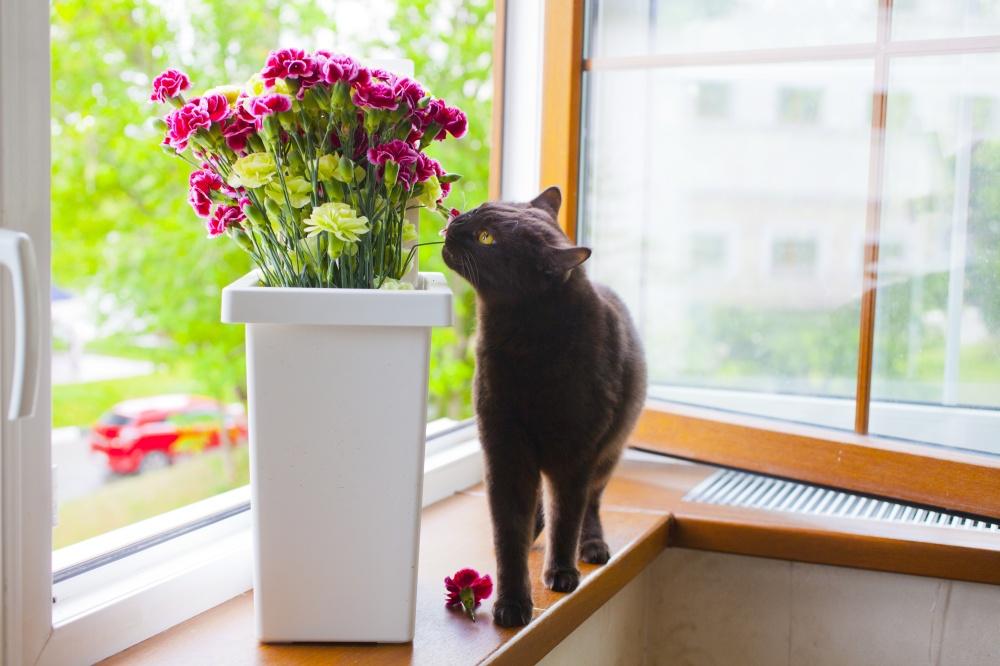Кот цветы