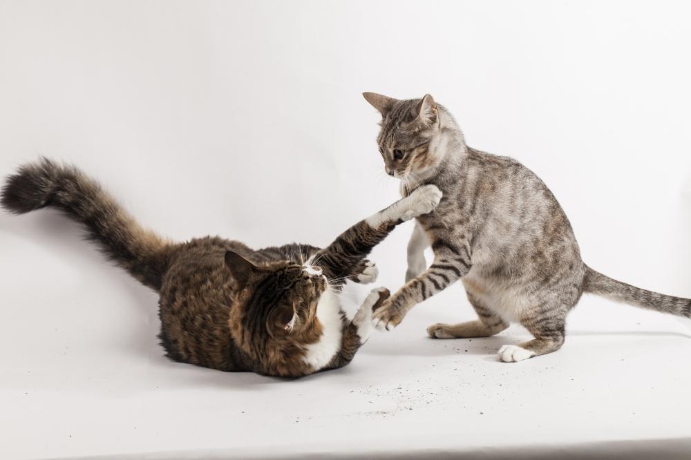 Кот лижет секс с котом