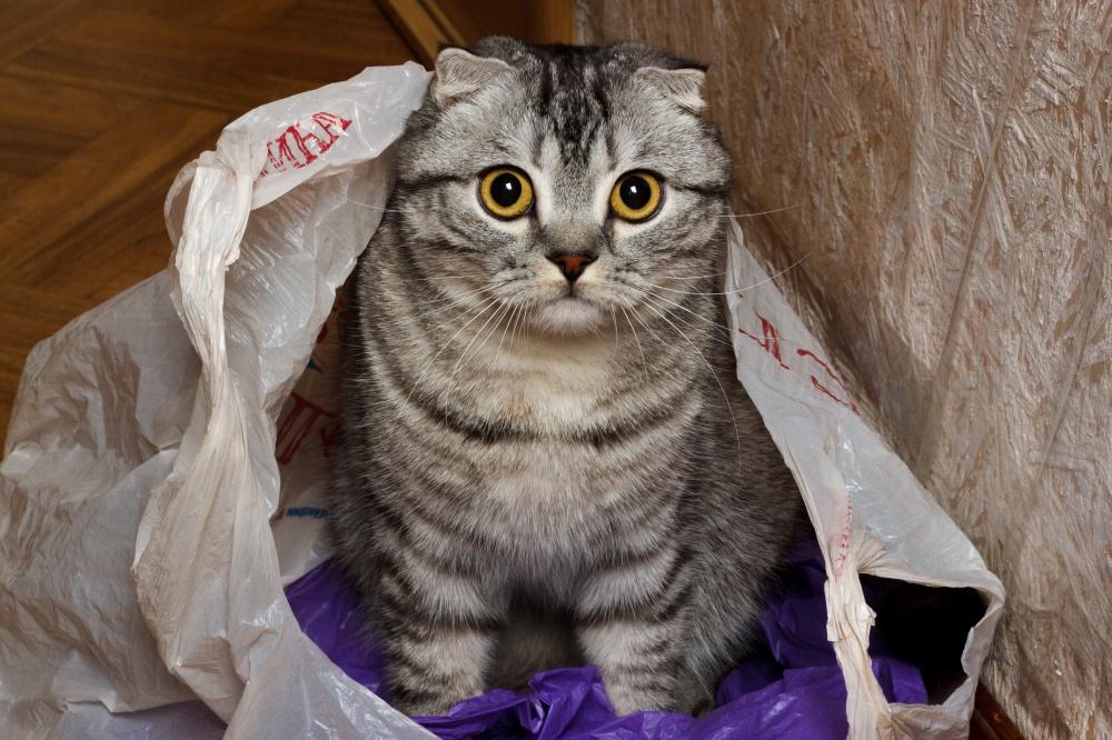 Если кот съел пакет что делать и нужно ли беспокоиться