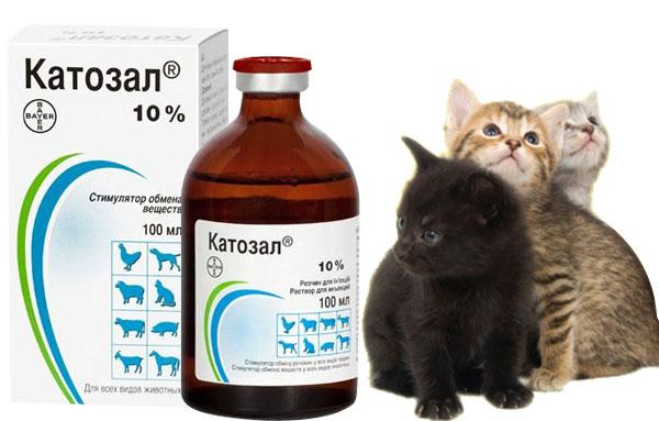 Катозал — что за препарат для животных, как используется в.