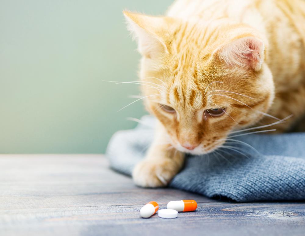 Эссенциале кошке дозировка